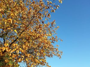 Herbstblues